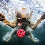 dogs-swimming-pool by the Little Friends Collection