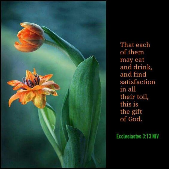 Ecclesiastes 3:13 NIV That each of them may eat and drink, and find satisfaction in all their toil, this is the gift of God.