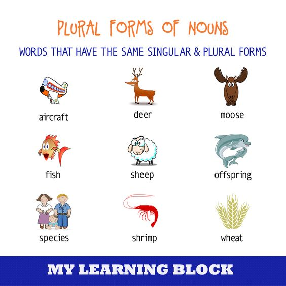 Different types different types of and we on pinterest for Plural of fish