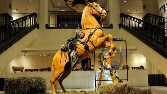 Cowboy actor Roy Rodgers trusty sidekick, Trigger, was immortalized in his iconic rearing pose. Bought by a U.S. cable company for $266,500 in 2010, Trigger is one of many taxidermy horses on display across the world.