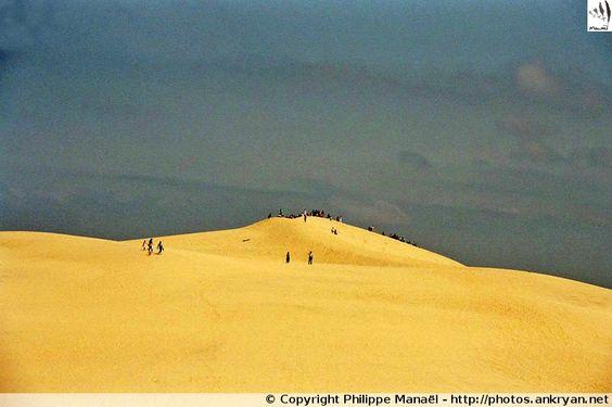 Des fourmis sur la Dune du Pilat - Bassin d'Arcachon (France, Aquitaine, Gironde)