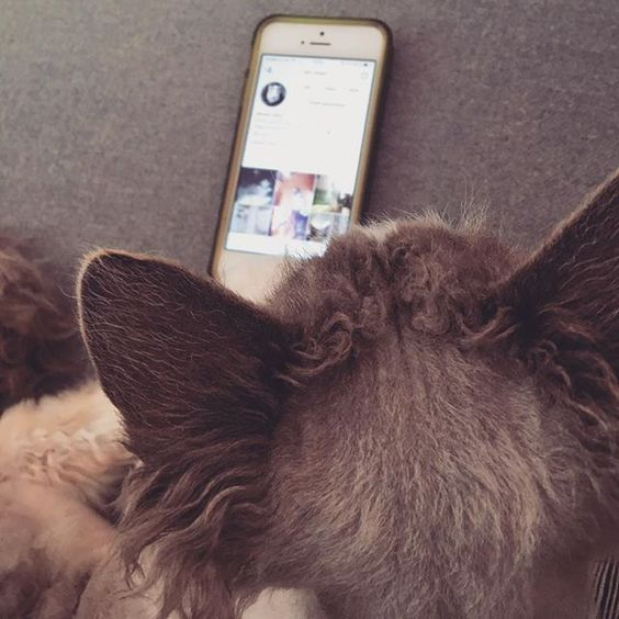 Tough to be a social media manager and hard work to please you with kitty cat cuteness. But love it 💚💛💚 #devonrex #catsofinstagram #cat #katze #neko #catstagram #miau #meow #meowbox #fluffy #cute #iphone #iphone5 #cutepetclub #instacat_meows #balousfriends #socialmedia #manager #job #work #workhard #playhard #workhardplayhard #managerlife #homeoffice #tuft #employeeofthemonth