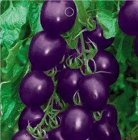 SD0133 Unique Rare Purple Cherry Tomato Vegetable Seeds, High Germination, 60-Days Money Back Guarantee (20 Seeds) by PlantGrabber, http://www.amazon.ca/dp/B00FB3OHDW/ref=cm_sw_r_pi_dp_3Y3htb19M2Z52: