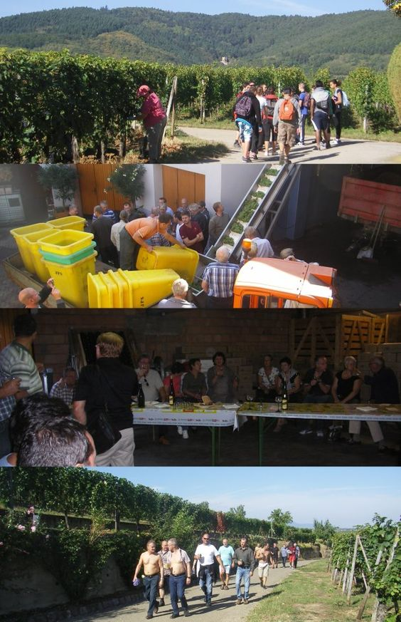 #Vendanges #vin #Alsace #DrinkAlsace http://www.facebook.com/photo.php?fbid=473657149332985=a.250725331626169.65307.250258565006179=1_count=1