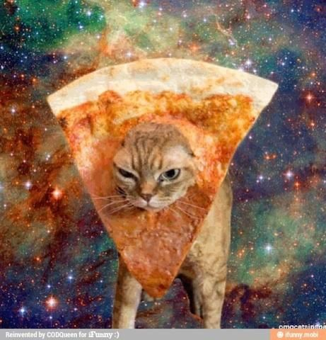 Funny space cat pizza | LOL | Pinterest | Cats, Pizza and ...