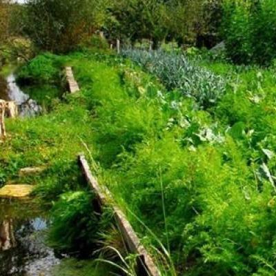 Permaculture noblesse and agriculture on pinterest - La permaculture c est quoi ...