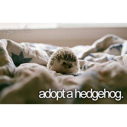 So cute!! :)