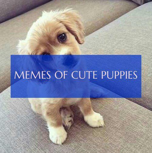 Memes Of Cute Puppies Meme Von Sussen Welpen Chia Recipes Ideas