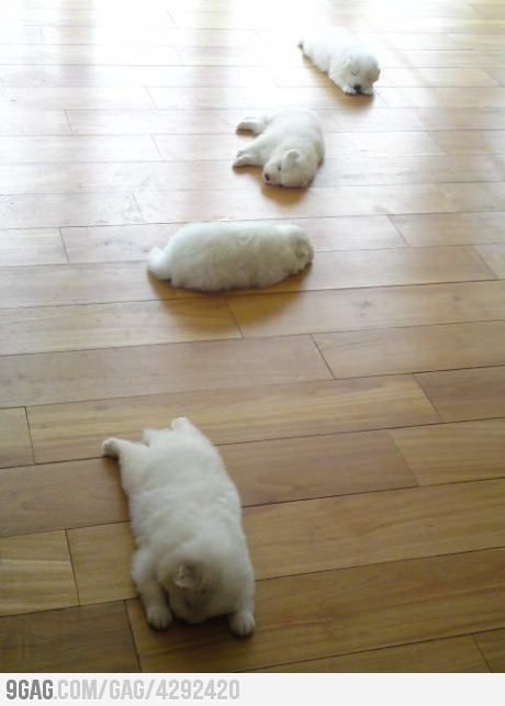 Trail of puppies