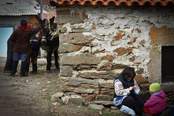 Courtesy: AEPGA - Associação para o Estudo e Protecção do Gado Asinino, Atenor (Portugal).