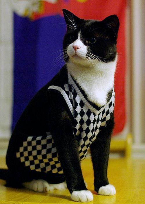 Preppy Cat