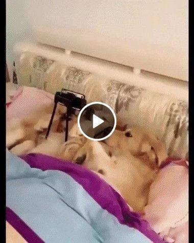 Trio de cachorro folgado assistindo filme