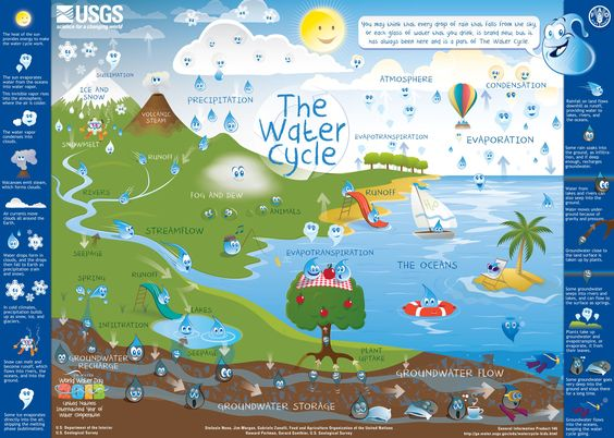 Printable water cycle placemat or poster. The U.S. Geological Survey (USGS) and the Food and Agriculture Organization of the United Nations (FAO) have teamed up to create a water-cycle diagram for kids and elementary and middle schools. Earth day.