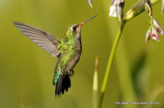 el mundo magico del colibri - Buscar con Google