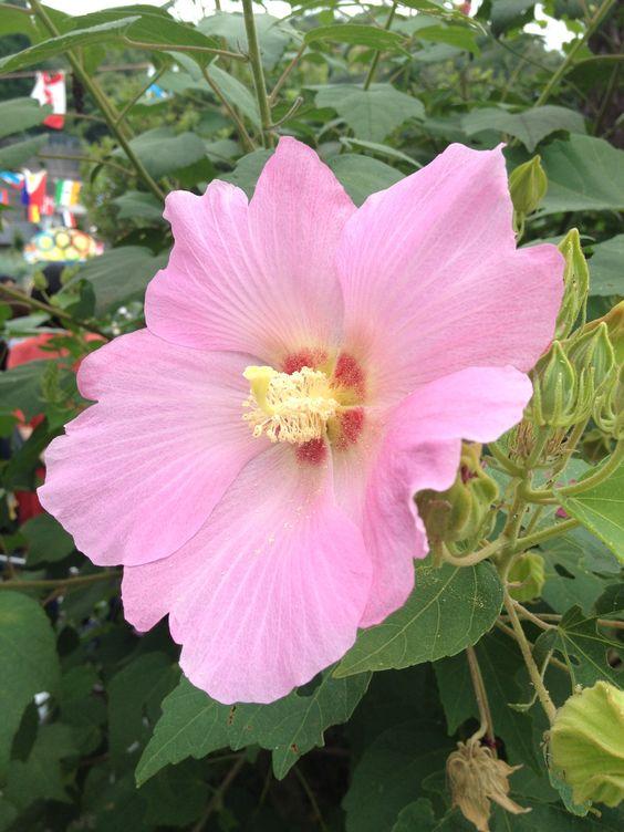 保育園の花