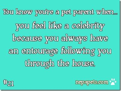 Do you have a 4 footed entourage following you around your house?