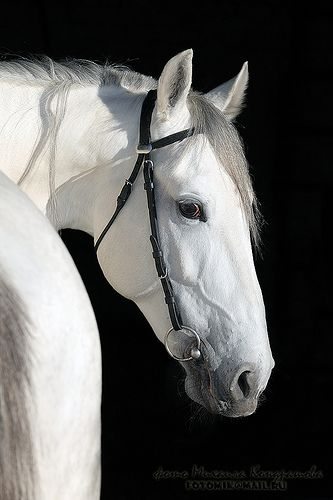 #pferd über u383 | Flickr