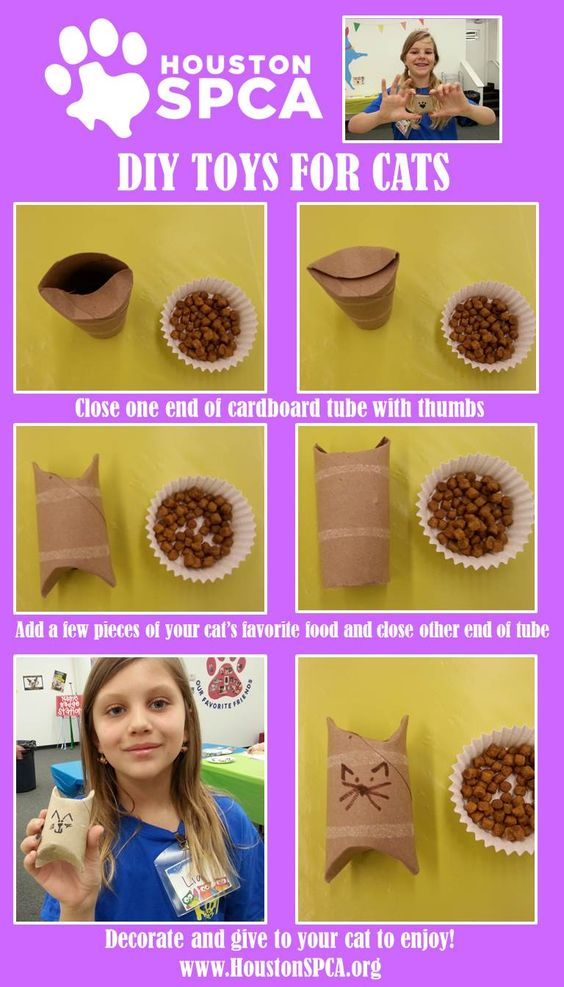 Campers Houston And Cat Toys On Pinterest