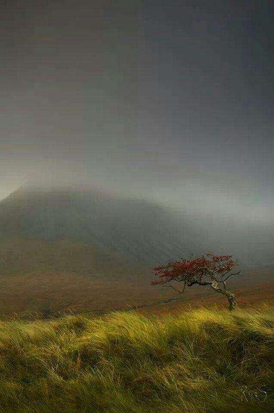 Outlander , en Escocia Ef876935074b9939f1976b3b1b038c12
