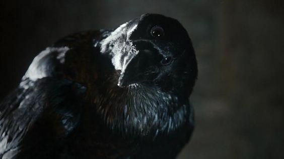 O corvo de 3 olhos.