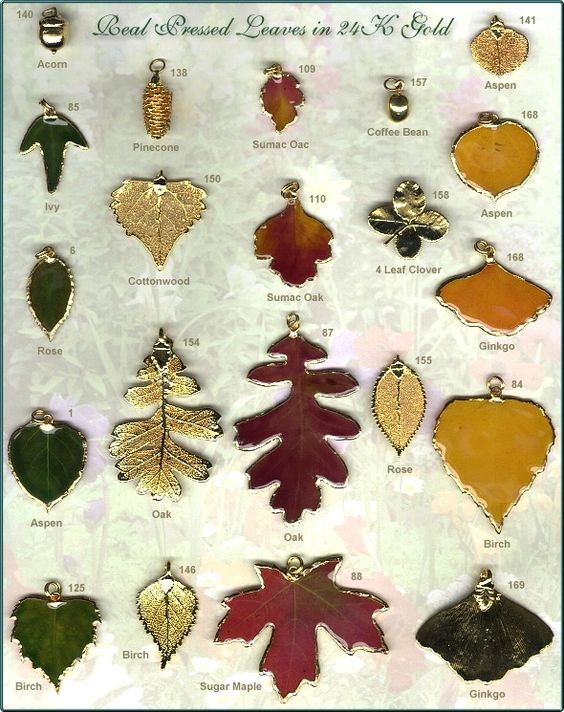 Pretty!! Real Pressed Leaves in 24K Gold - Forest Flower Jewelry