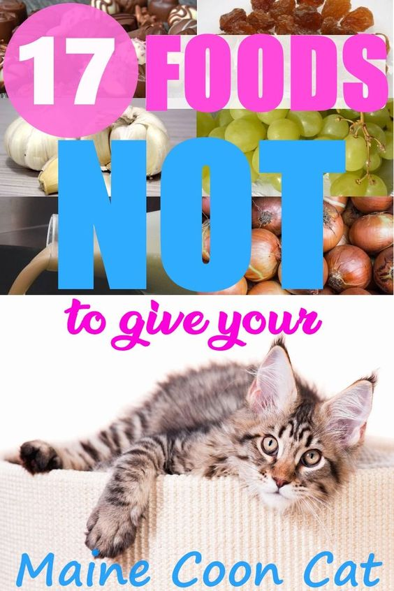 Pin On Food Treats For Pets