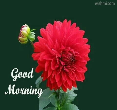 50 Hd Good Morning Flowers Pictures With Messages Good Morning Wishes Images With Flowers And Rose Flower Pictures Flower Images Red Flower Wallpaper