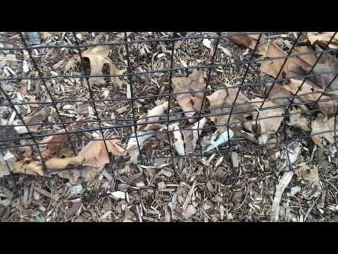 tenax pet fence