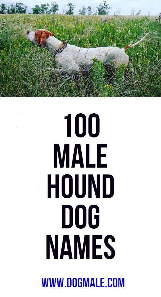 100 Male Hound Dog Names Dog Names Funny Dog Names Hound Dog