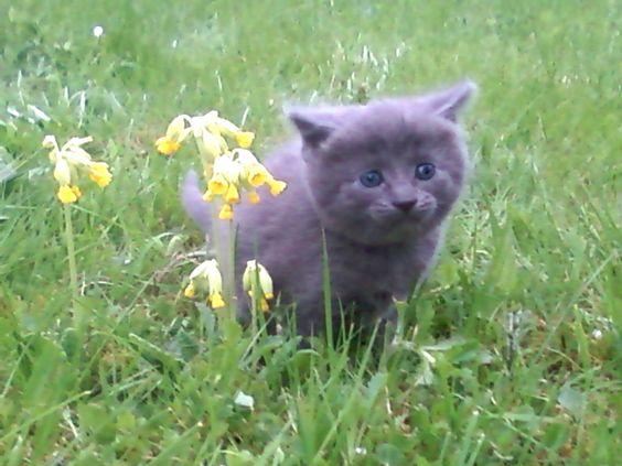 Maya Ze #Cat bébé  Quelle est belle n'est ce pas ?