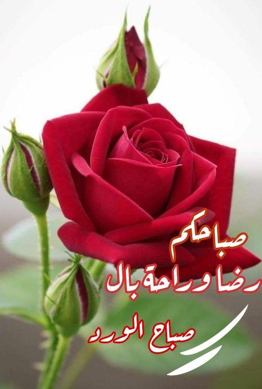 صبحكم المولى برضاه وبلغكم عفوه وغفرانه Good Morning Arabic Good Morning My Love Morning Images