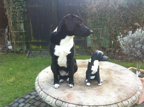 Hund Momo In Klein Aus Keramik Hunde Keramik