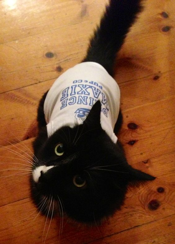 Even Cool cats like our personalised tops