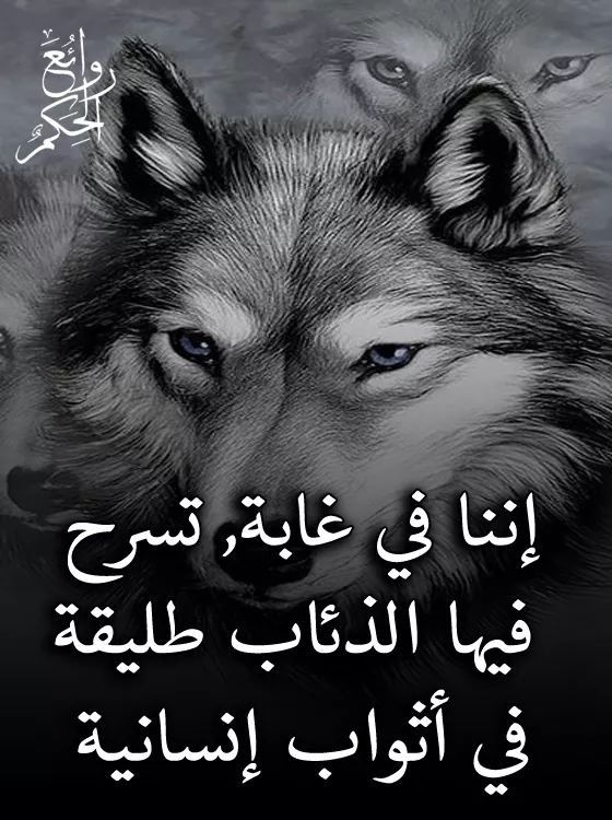 Pin By فلسطينية ولي الفخر On حقيقة Ahadith Poster Movie Posters