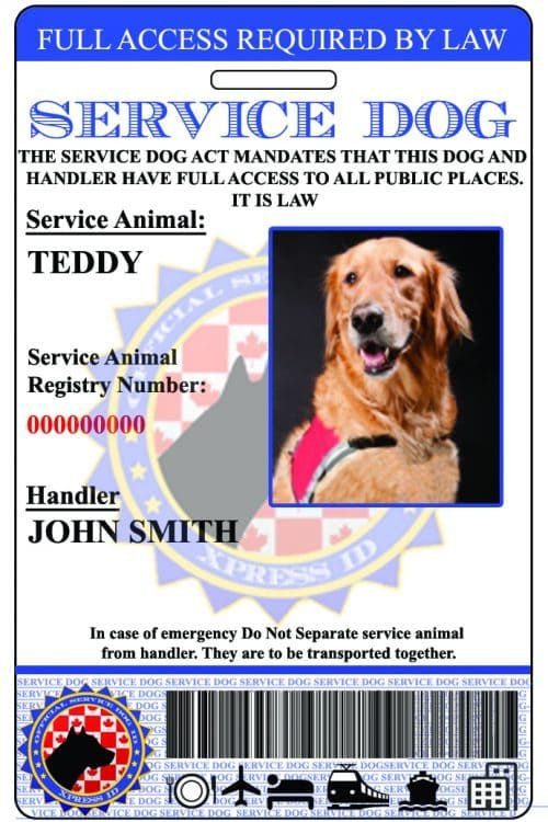 Service Dog Id Custom Holographic Service Dogs Support Dog Dog Id
