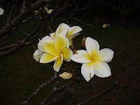 Oahu Family Activities: Moanalua Gardens