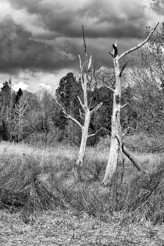 2 Ex-Trees