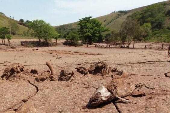 Lama de barragem já causou a morte de 11 toneladas de peixes - Brasil - Estadão