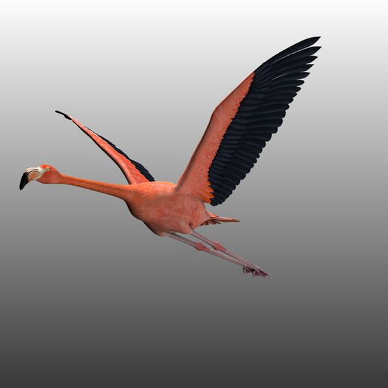 flying flamingoes ii by - photo #43