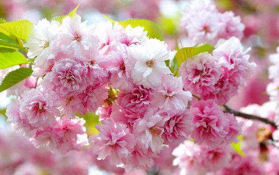 весна природа - Поиск в Google: