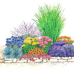 Drought Tolerant Sun Garden  Light: Full Sun to Partial Shade    You will get the following plants:  A – 1 Zebra Grass   B – 1 Russian Sage  C – 3 Cornflower  D – 3 Dragon's Blood Sedum   E – 1 Dwarf Gaillardia   F – 2 Select Blue Festuca   G – 3 Blue Fragrant Lavender   H – 3 Gay Butterflies Butterfly Plant