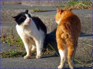 閲覧注意 もふもふ 猫の金玉 かわいすぎて萌え死ぬ人続出www 画像集 Naver まとめ Cat Day Cute Animals Cat Paws