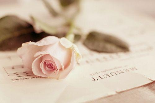 #rose #pink #pastel #music