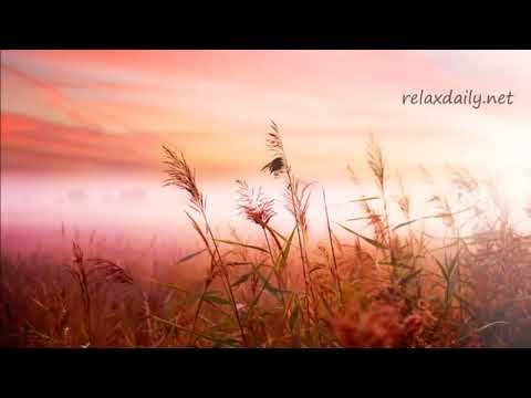 Relaxdaily S Instrumental Background Music Slow And Relaxing Music For Work To Study For Yoga Spa And A Relaxing Music Field Wallpaper Background