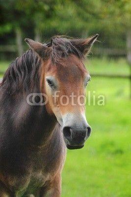 Portrait: Pferd