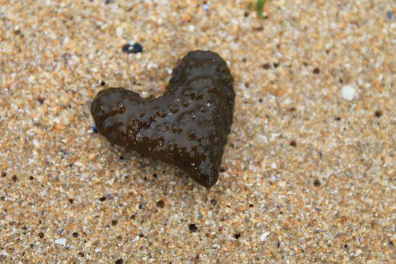 love seaweed