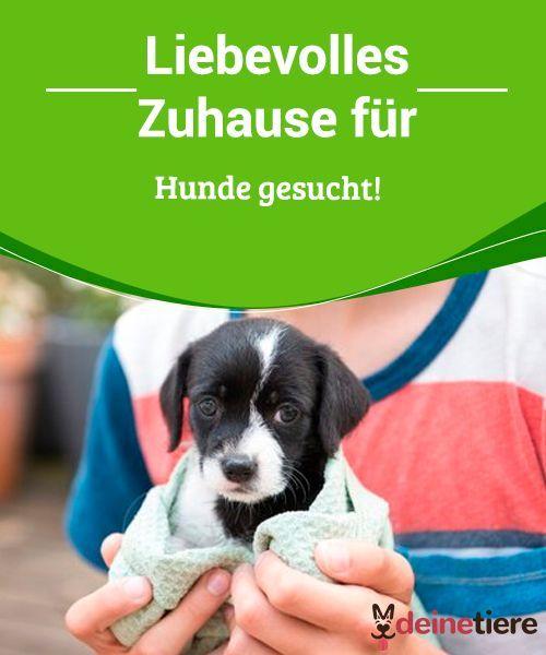 Liebevolles Zuhause Fur Hunde Gesucht My Animals Hund Gesucht Hunde Zu Kaufen Hunde