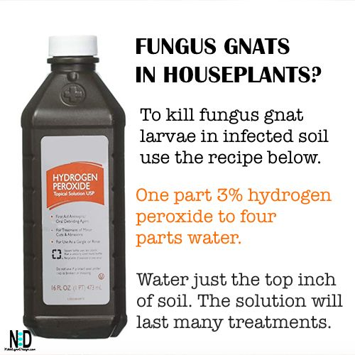 Fungus Gnat Indoor Houseplant Recipe Nikki Lynn Design Plant Pests Gnats In House Plants House Plants