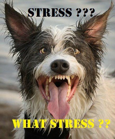 Stress stress... WHAT stress?