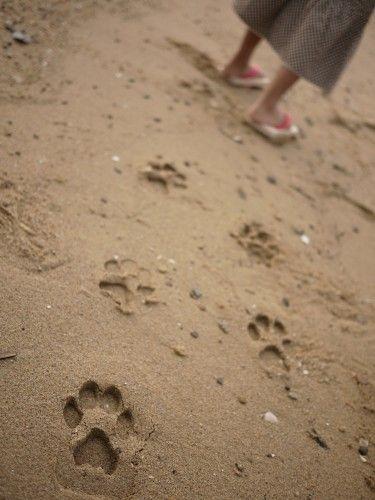 huellas,  estan hechas por las sandalias de la niña!!!! jajaja
